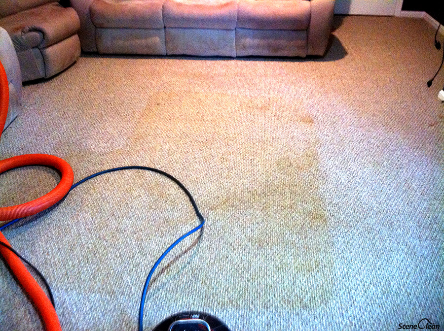 Carpet Cleaning, IICRC Certified Firm