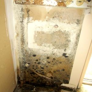 Mold Remediation Job Photo - Scene Clean